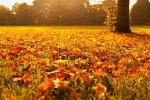 Gedichte über Liebe & Leben Gelb rollt mir zu Füßen der brausende Kur von Friedrich von Bodenstedt