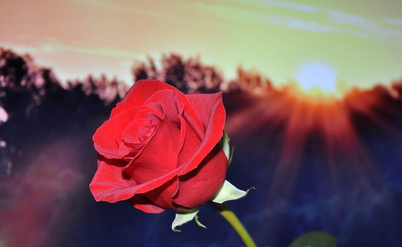 Liebesgedichte – 1000 mal