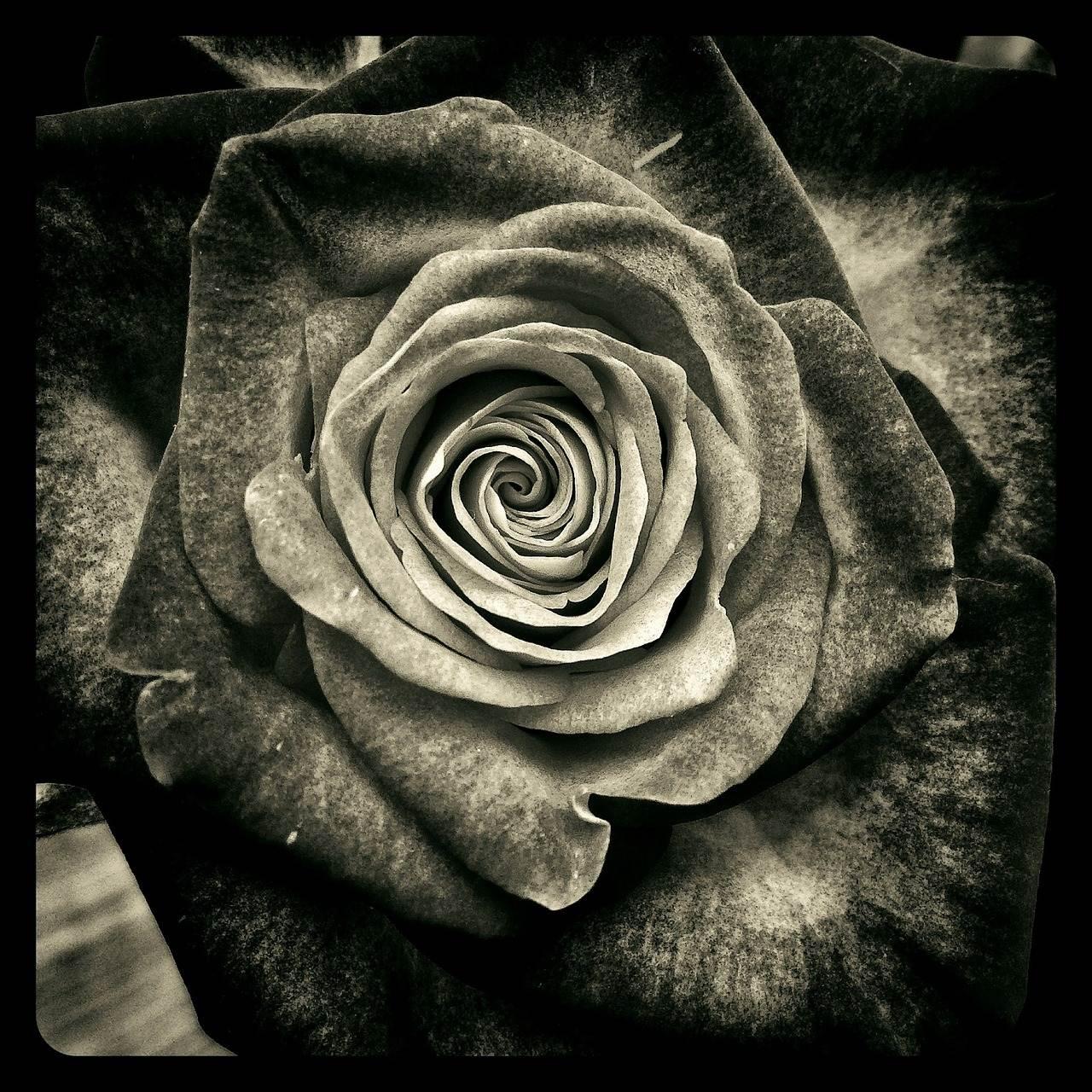 Liebesgedichte – Ich weiß nicht ob es Liebe ist