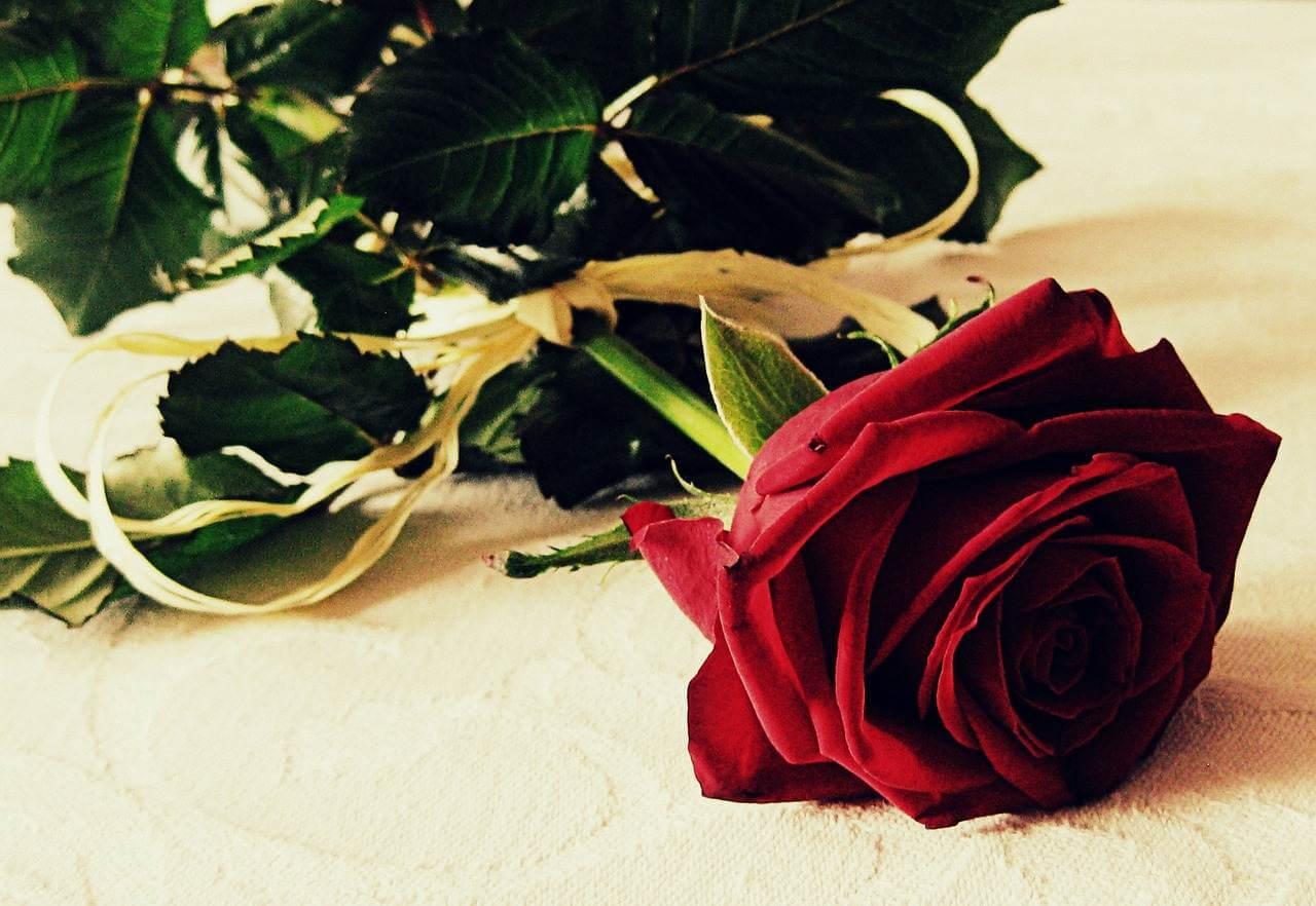 Die Sprache der Blumen für Liebende
