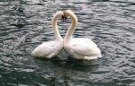 Liebesgedichte - liebst du ...