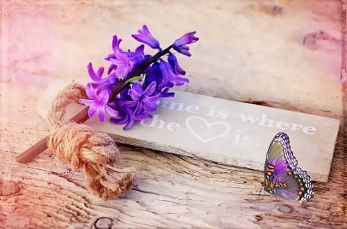 Liebesgedichte – Diese Schmetterlinge