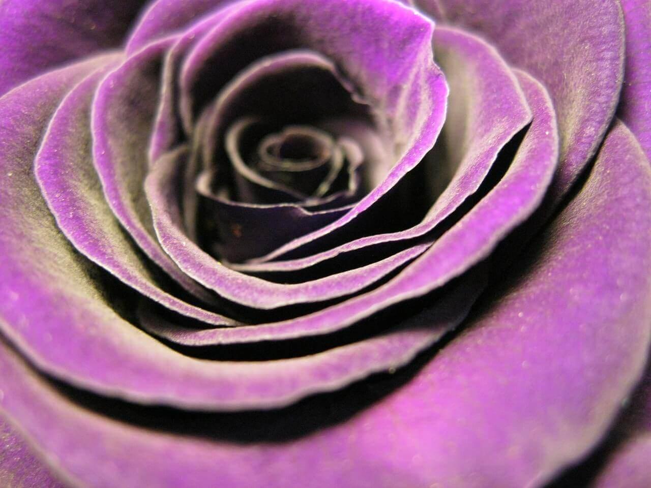Liebesgedichte – Wahre Liebe