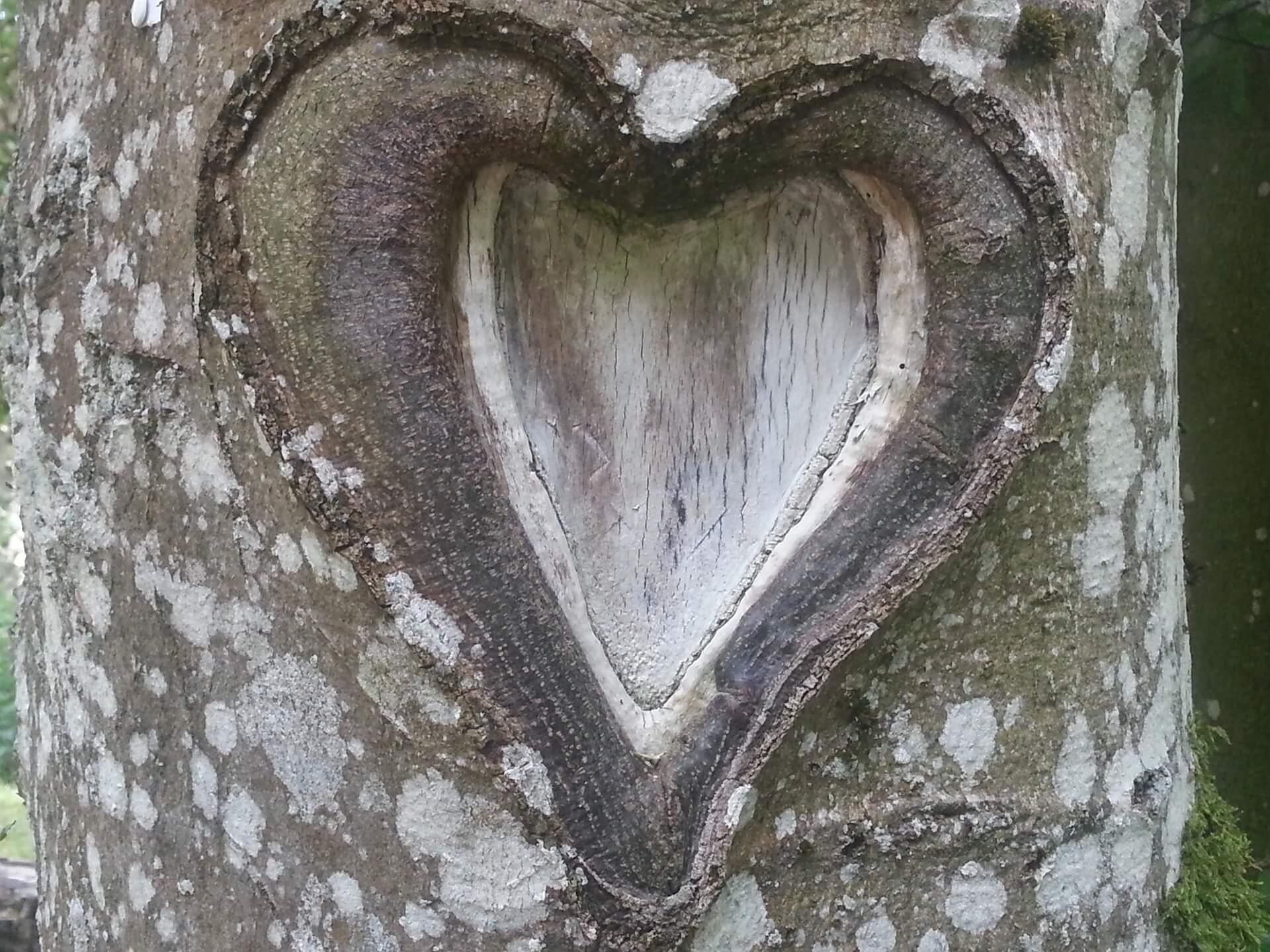 Liebesgedichte – Gefühls