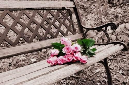 Liebesgedichte – Love the Rose