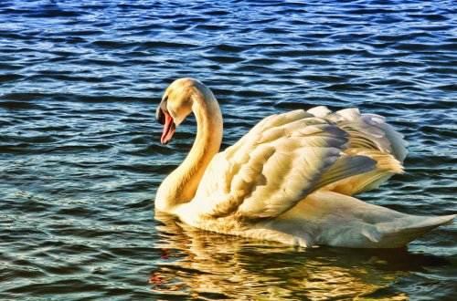 bird-1010595_1920