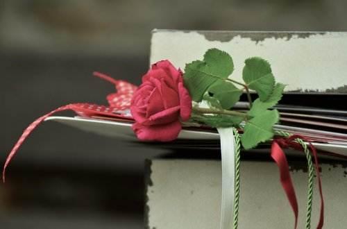 rose-889572_1920