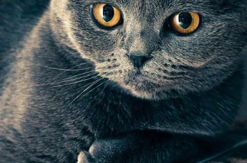cat-1057829_1920