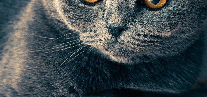 Gedichte über Liebe & Leben - Katzennatur Adelbert von Chamisso