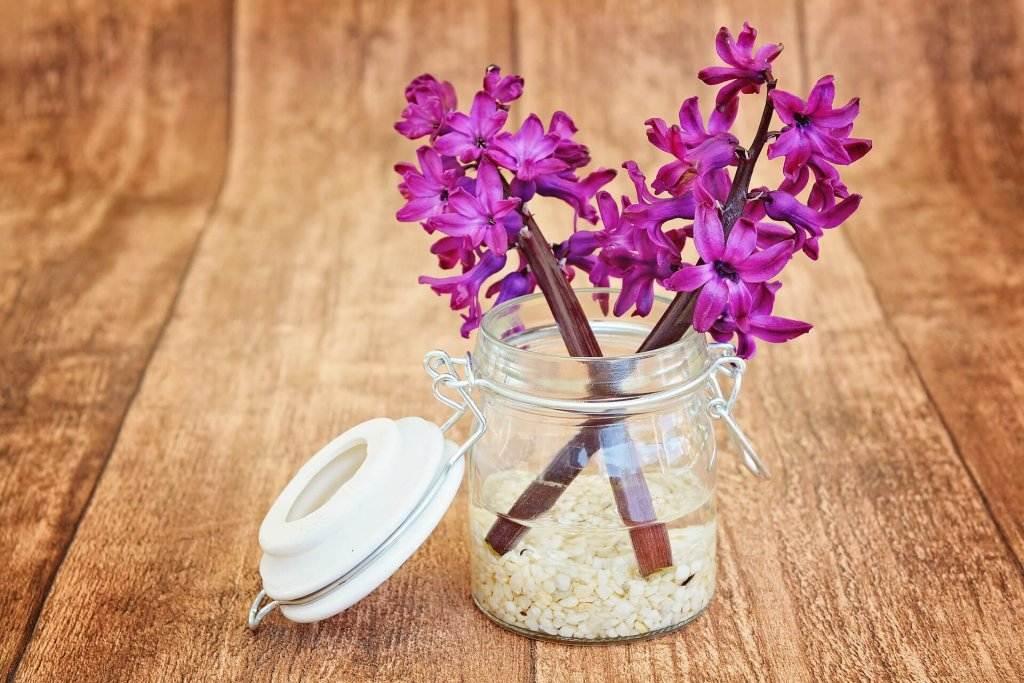 hyacinth-747131_1920