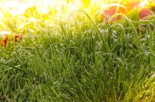 meadow-1025022_1280