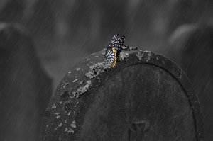 Gedichte über Liebe & Leben - Mit Gewitterfurcht in den Rippen von Max Dauthendey tombstone-660890_1920-1-300x199 Gedichte über Liebe & Leben - Mit Gewitterfurcht in den Rippen von Max Dauthendey tombstone 660890 1920 1