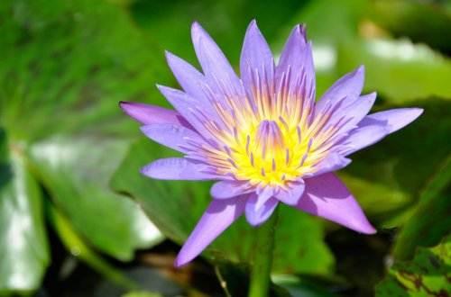 aquatic-plant-639263_1920