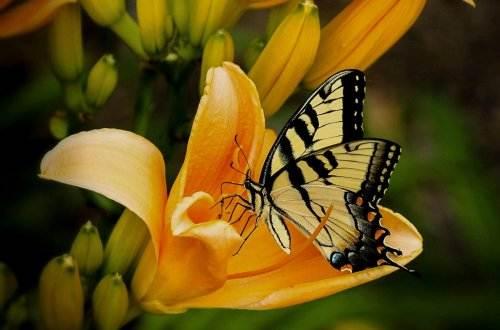 butterfly-144053_1920
