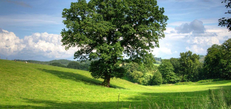Gedichte über Liebe & Leben - Die Eichbäume von Friedrich Hölderlin