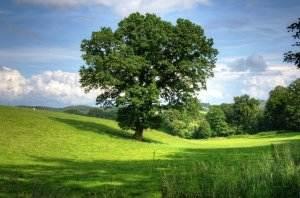 Gedicht über Liebe & Leben - Dreikönigslied tree-402953_1920-300x198 Gedicht über Liebe & Leben - Dreikönigslied tree 402953 1920