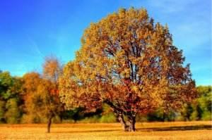 Gedichte von Liebe & Leben - An eine Geschminckte von Andreas Gryphius tree-99852_1920-300x199 Gedichte von Liebe & Leben - An eine Geschminckte von Andreas Gryphius tree 99852 1920