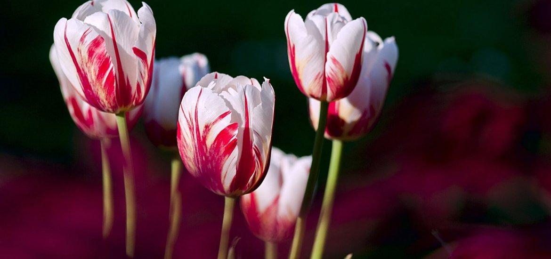 Gedichte über Liebe & Leben - Im wunderschönen Monat Mai von Heinrich Heine