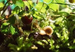 Gedichte über Liebe & Leben - Melusine von Hugo von Hofmannsthal snail-582194_1280-300x208 Gedichte über Liebe & Leben - Melusine von Hugo von Hofmannsthal snail 582194 1280