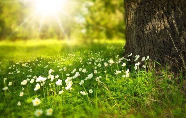 Liebesgedichte – April von Johann Wolfgang von Goethe