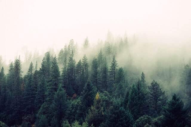 Liebesgedichte – Herbst von Johann Wolfgang von Goethe