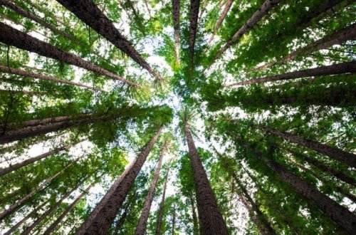 Liebesgedichte – Begegnung in der Kastanien-Allee von Rainer Maria Rilke
