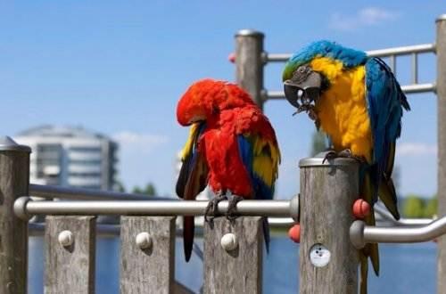 Liebesgedichte – Der Papagei von Christian Morgenstern