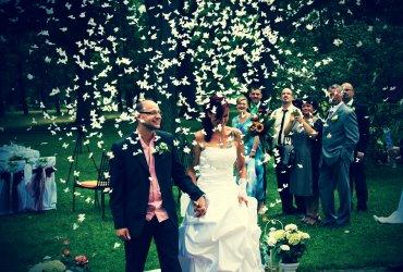 Traurede einer wunderschönen Hochzeit