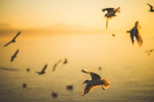 Liebesgedichte – Möwenflug von Conrad Ferdinand Meyer Möwen sah um einen Felsen kreisen Ich in unermüdlich gleichen Gleisen, Auf gespannter Schwinge schweben bleibend, Eine schimmernd weiße Bahn beschreibend, Und zugleich in grünem Meeresspiegel Sah ich um dieselben Felsenspitzen Eine helle Jagd gestreckter Flügel Unermüdlich durch die Tiefe blitzen. Und der Spiegel hatte solche Klarheit, Daß sich anders nicht die Flügel hoben Tief im Meer, als hoch in Lüften oben, Daß sich völlig glichen Trug und Wahrheit. Allgemach beschlich es mich wie Grauen, Schein und Wesen so verwandt zu schauen, Und ich fragte mich, am Strand verharrend, Ins gespenstische Geflatter starrend: Und du selber? Bist du echt beflügelt? Oder nur gemalt und abgespiegelt? Gaukelst du im Kreis mit Fabeldingen? Oder hast du Blut in deinen Schwingen?