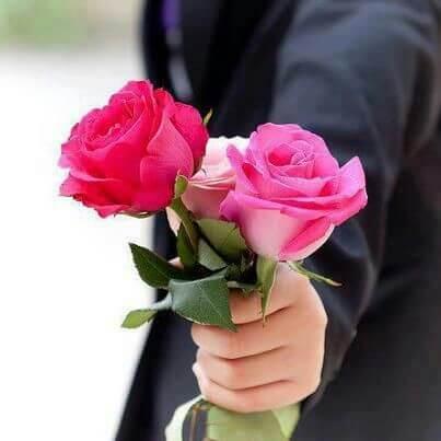 drei rosen in einer hand - Das Symbol der Liebe - die rote Rose