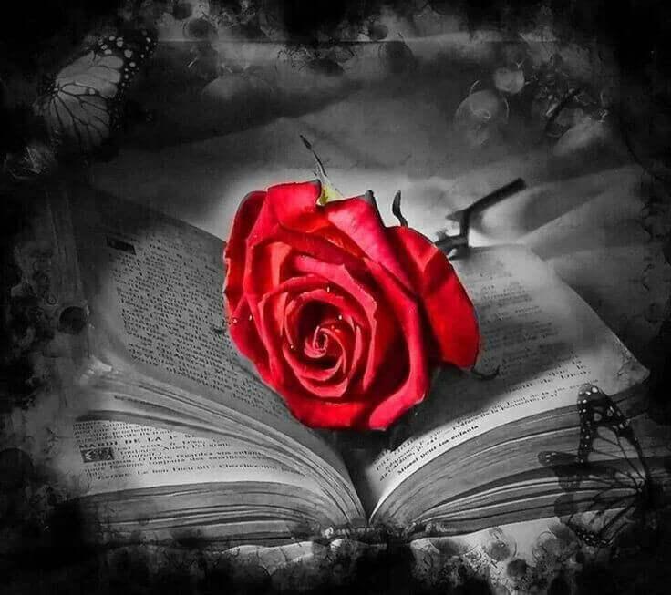 rote Rose auf altem Buch
