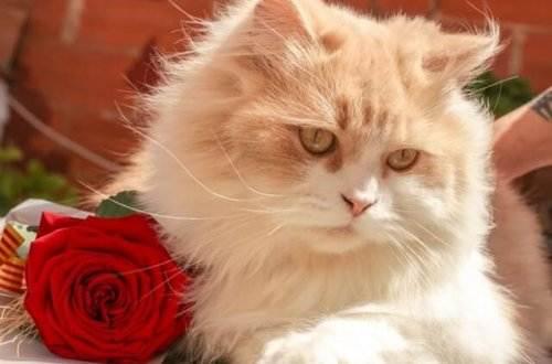 Liebesgedichte – Katzen und Pfauen von Hugo Ball