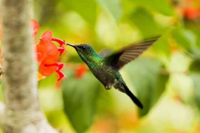 Liebesgedichte – Das Ei von Kolibri Joachim Ringelnatz