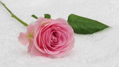 Flitterwochen zu Weihnachten: Warum ist Heiraten im Winter so beliebt?